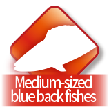 Medium-sized blue back fishes