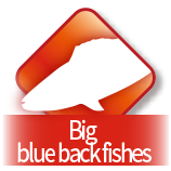 Big blue back fishes